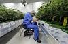 Los tweets sobre los beneficios para la salud del cannabis están llenos de falsedades