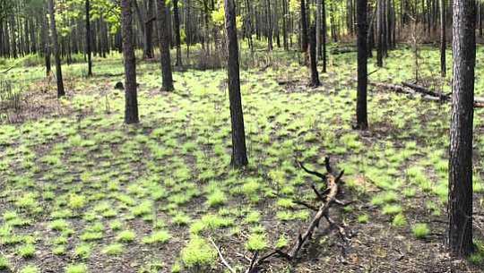 आग के बाद प्रकृति के पुनर्जन्म से होम गार्डर्स क्या सीख सकते हैं
