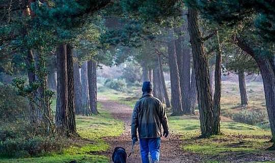 Menghabiskan dua jam seminggu di alam terkait dengan kesehatan dan kesejahteraan yang lebih baik