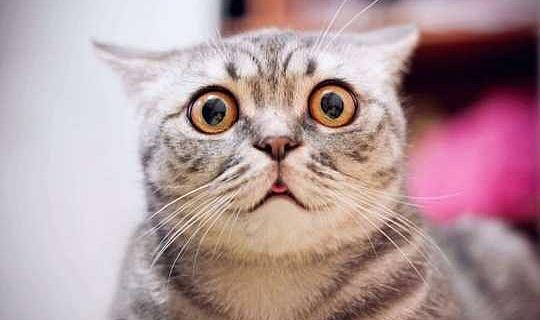 Apakah Moncong Kucing Kejam Atau Berguna?