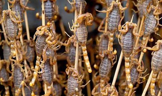 كيف تجعل الناس يأكلون الحشرات ويشربون مياه الصرف الصحي