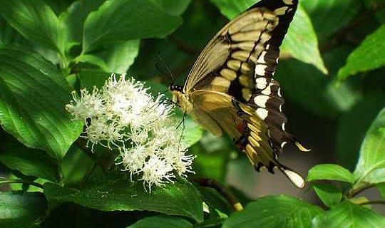 Yerli Bitkilerin Bahçesinde Böceklerle Mücadele Etme
