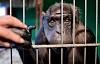Antes de tocar Compartir en esa linda foto de animal, considere el daño que puede causar