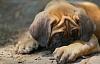 Amigo estresado del hombre: cómo su salud mental puede afectar a su perro