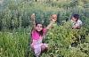 Cultiver un jardin peut aussi fleurir Des communautés éco-résilientes, interculturelles et souveraines face aux aliments