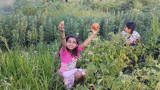 Cultivar un jardín también puede florecer comunidades eco-resilientes, interculturales y soberanas alimentarias