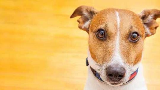 Apakah Nilai Kehidupan Anjing Anda, Dan Mengapakah Ia Penting