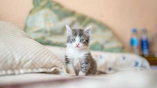 15 तरीके अपने इनडोर बिल्ली को खुश रखने के लिए