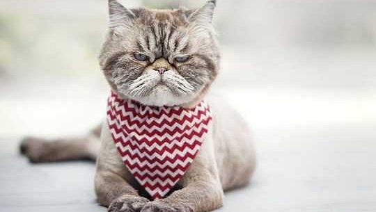 Você é um gato Whisperer? Como ler expressões faciais de Fluffy