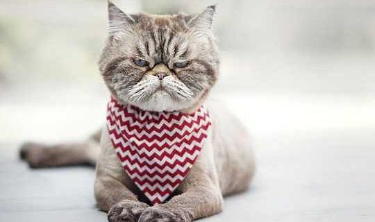 Adakah Anda Pembisik Kucing? Cara Baca Ekspresi Wajah Fluffy