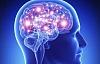 Su cerebro, grasas saludables y la importancia de adaptarse a sus genes