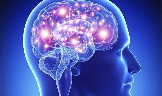 Otak Anda, Lemak Sehat, Dan Pentingnya Memasukkan Ke Gen Anda