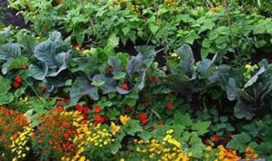 I partnerskap med jorden: Biodynamisk trädgårdsskötsel