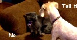 آپ کا کتا کیا بات کرتا ہے اور آپ کو خود سے بہتر جانتا ہے