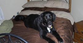 Dog Wisdom: Vivez maintenant, aimez maintenant