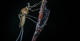 Kenapa Musim Panas Anda Dapat Penuh Nyamuk