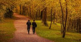 Waarom 'n lewenswandel in die bos help jou liggaam en jou siel