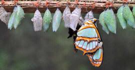 蝴蝶還記得毛毛蟲嗎?