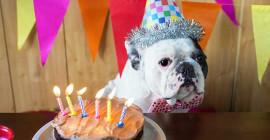 کتے سالوں یا بلی سالوں میں میرا پالتو جانور کتنے پرانا ہے؟