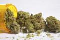 La levadura puede hacer valiosos ingredientes de la marihuana.