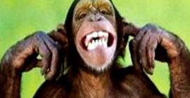 Deteniendo la mente de los monos y encontrando paz interior y paz