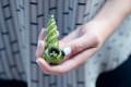 Hoe Canadezen koop Cannabis en word hoog nou dat dit wettig is