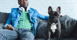 Verstaan Katte En Honde Ons Wanneer Ons Mia Of Bark?
