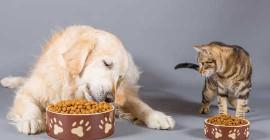 کیڑے پروٹین: آپ کے ماحولیاتی دوستانہ پالتو جانوروں کے لئے دن کا ڈش