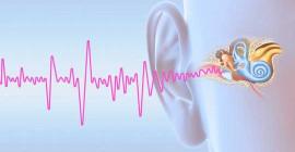 چرا وزوز گوش هنوز هم یک راز برای علم است