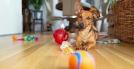 Uitsluitings kan ook stresvol wees vir troeteldiere - so kan u u hond vermaak