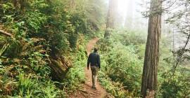Hoe wildheid in parke jou beter kan laat voel