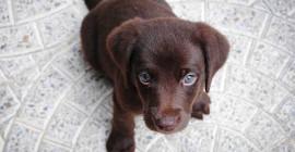 Cara Membantu Anjing Dan Kucing Menguruskan Kebimbangan Pemisahan Ketika Anda Kembali Berusaha